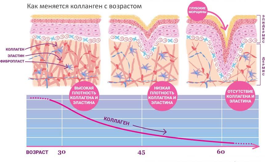 Структура коллагена кожи. Старение кожи.